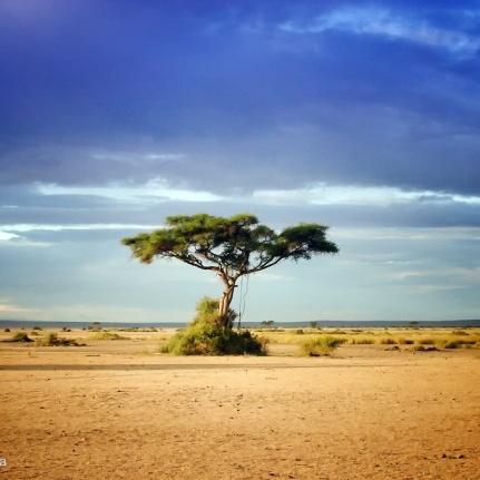 photo acacia tree
