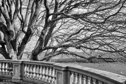 leafless tree in winter