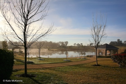 photo pond and bare trees in early morning mist