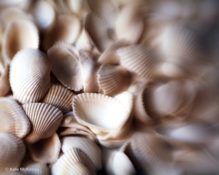 photo of shells