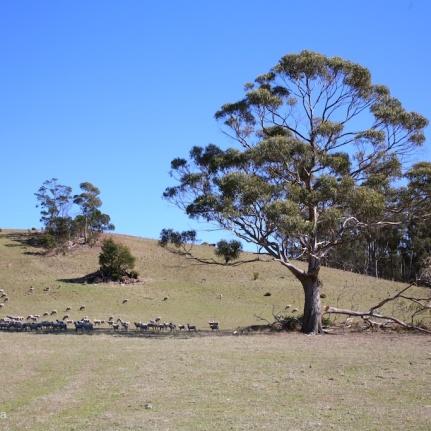 south east tasmania